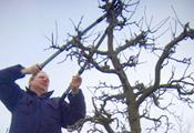 Baumschnitt und Gartendienst